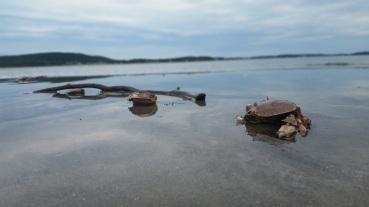 beachcombing crabs @ popham