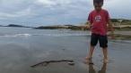 beachcombing @ popham state park