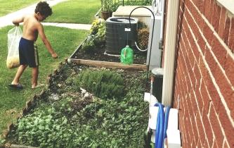 composting calendula. #gardening